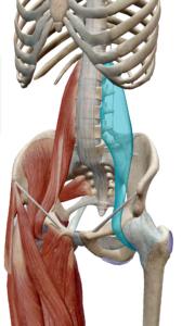 大腰筋 腰痛 整体院とんち
